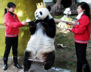 happy-birthday-panda