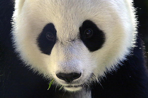 Three Affordable Tools to Help You Get a Favorable Google Panda Response